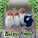 Картинка доброе утро с птичками