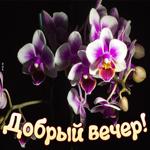 Картинка добрый вечер с орхидеями
