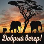 Картинка добрый вечер со слонами