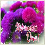 Картинка хорошего дня с хризантемами