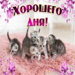 Картинка хорошего дня с котятами