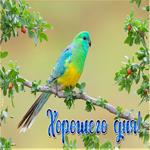 Картинка хорошего дня с птичкой
