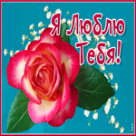 Картинка люблю с розой