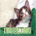 Картинка приветик с котенком
