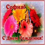 Картинка с днем рождения София с анимацией