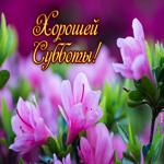 Картинка с субботой с цветами