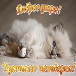 Картинка удачного четверга с котиком