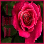 Картинка я тебя люблю с розой
