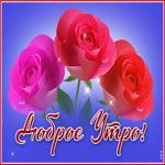 Классная открытка доброе утро с розами