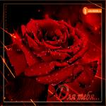 Красивая открытка для тебя с розами