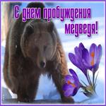 Красивая открытка день пробуждения медведя