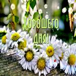 Красивая открытка хорошего дня с ромашками