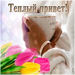Красивая открытка тёплый привет