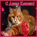 Красивая открытка Всемирный день кошек