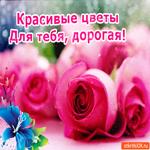 Красивые Цветы Для Тебя, дорогая