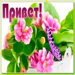 Красивый привет с бабочкой