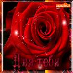 Красная роза для тебя