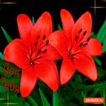 Лилии для тебя