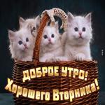 Милая картинка хорошего вторника с котиками