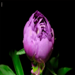 Миленький живой цветок