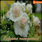 Открытка хорошего настроения с цветами