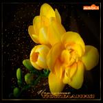 Открытка желтые цветы и пожелания