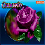 Необычная роза тебе