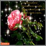 Обаятельная роза для тебя