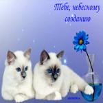 Очень красивые котики