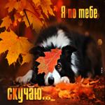 Осенняя открытка скучаю с собачкой