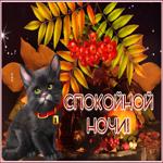 Осенняя открытка спокойной ночи с котенком