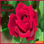 От души без слов роза для тебя