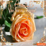 От всего сердца роза