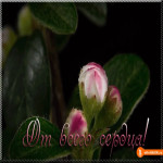 Открытка цветок от всего сердца