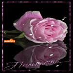 Нежная роза тебе