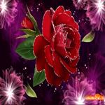 Открытка женщине цветы