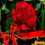 Открытка для тебя цветочки