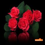 С цветами розами