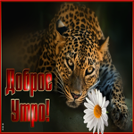 Открытка доброе утро с леопардом