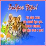 Открытка доброе утро с тигром