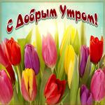 Открытка доброе утро с тюльпанами