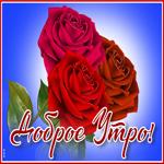 Открытка доброе утро с великолепными розами