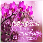 Открытка добрый день с орхидеей