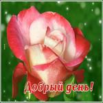 Открытка добрый день с розой