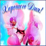 Открытка хорошего дня с орхидеями