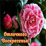Открытка отличного воскресенья с цветами
