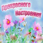 Открытка прекрасного настроения с полевыми цветами