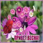 Открытка привет, весна