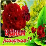 Открытка с днем рождения женщине с чудесной розой