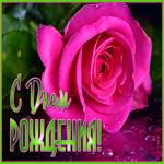 Открытка с днем рождения женщине с розой